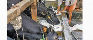 En riesgo, más de cien mil productores lecheros en México
