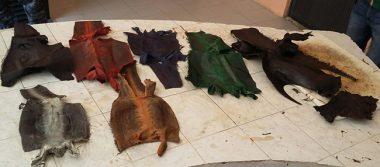 Detienen a presunto traficante de animales exóticos