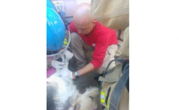 Mujer y 11 perros se intoxican en Zapopan