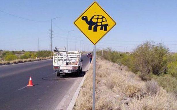 Colocan señalamiento para paso de tortugas, en Sonora