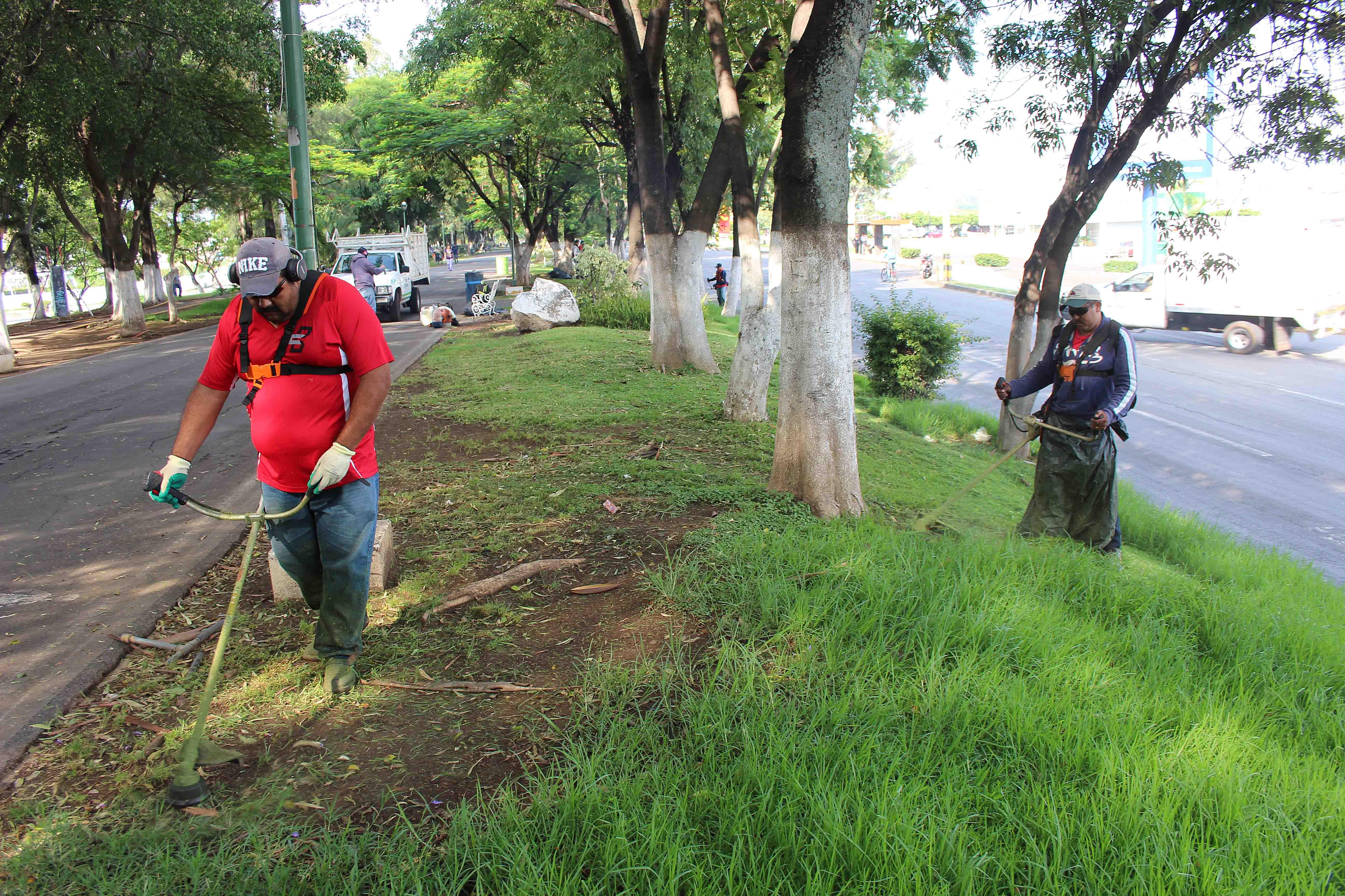 Constante mantenimiento a parques y jardines for Mantenimiento parques y jardines