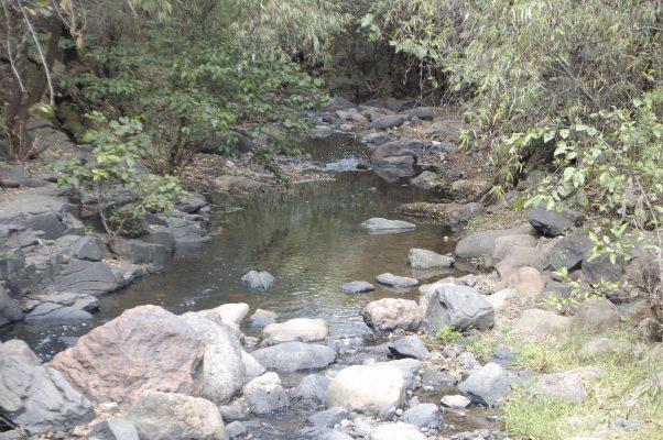Huertos de aguacate provocan escasez de agua en al menos 12 municipios