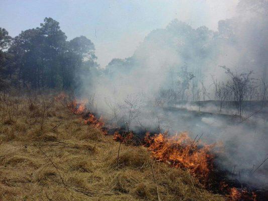 Afectadas más de 3 mil hectáreas por incendios