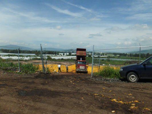 Tiradero de mango causa daños a cultivos