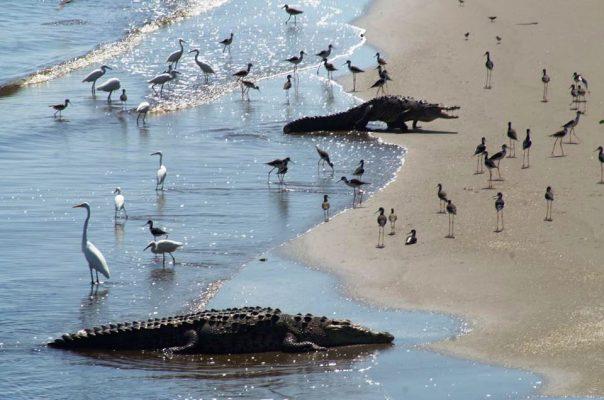 Pescadores en LC preservan humedales en sitio Ramsar