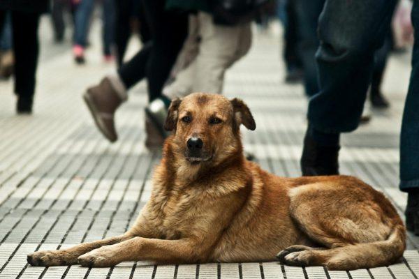 Realizan campaña de esterilización de perros
