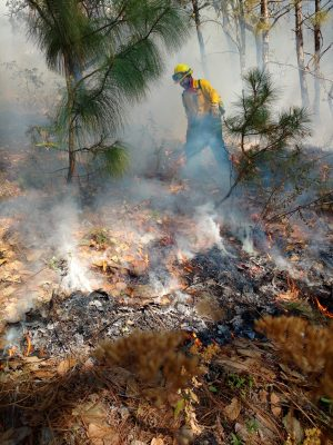 Devastadas por el fuego, 3 mil 500  hectáreas