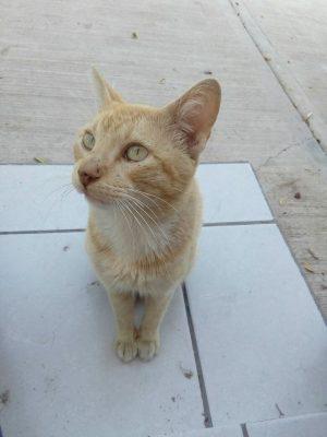 AnimaNaturalis realizó campaña de esterilización de mascotas
