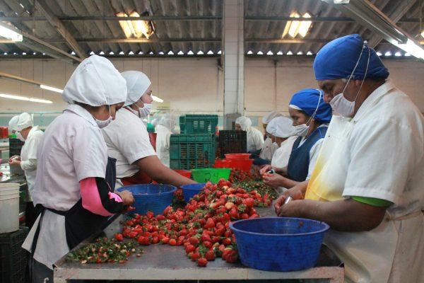 Nuevas reglas para empresas exportadoras