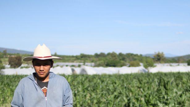 Agricultura protegida, igual a menor pérdida