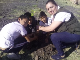 Reforestan áreas del Cecytem local