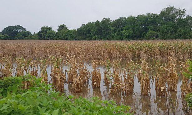 Amplían superficie agrícola contra daños climatológicos