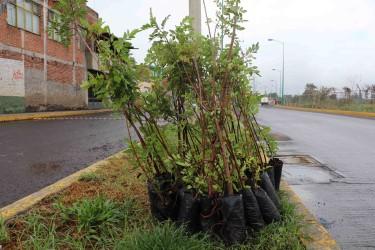 Empresarios realizarán acciones de reforestación