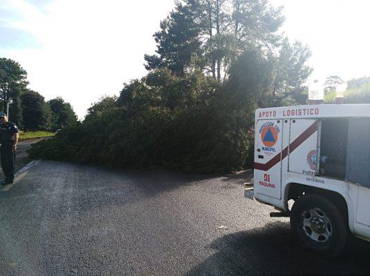 Árbol bloquea la carretera libre Pátzcuaro-Uruapan