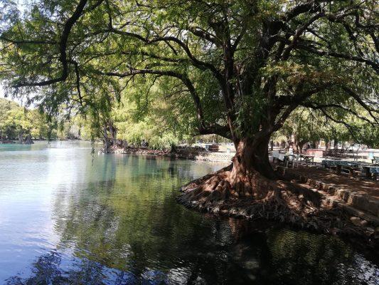Esperan 10 mil visitantes en el Lago de Camécuaro