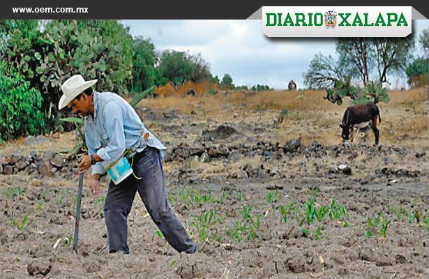 Rematan campesinos sus tierras por la crisis