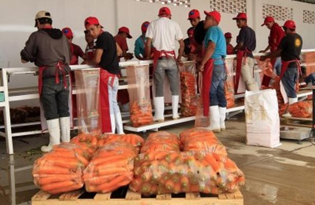 México refrendó ser el país número 12 en exportación de alimentos a nivel mundial