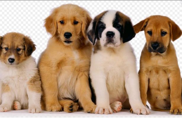 La GAM anuncia la construcción de la primera clínica veterinaria