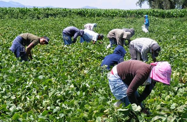 Trabajadores del campo alcanzan cifra histórica en seguridad social: STPS