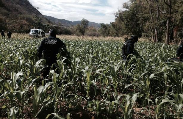 Fuerzas federales destruyen más 4 toneladas de marihuana, en Oaxaca