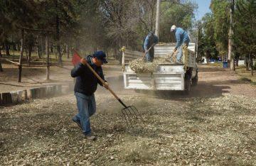 Gobierno de Naucalpan elabora composta con árboles de navidad