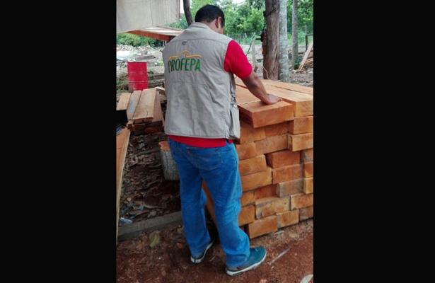 Asegura Profepa 4.6 m3 de madera de cedro rojo motoaserrada en Tabasco