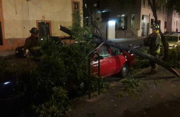 Caída de árbol causa daños en colonia Juárez
