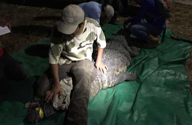 Capturan al cocodrilo 'devora humanos' en Chiapas