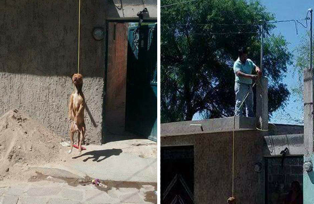 Colgó a su perro porque escapó de casa