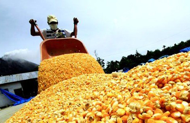 Existe falta de precio y mercado para comercializar el maíz: Pablo Rojas