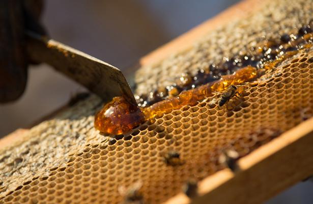 La miel en una de sus peores crisis en México