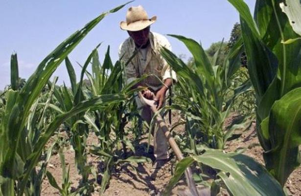 El precio por renegociación del TLCAN se cobrará en las urnas: campesinos