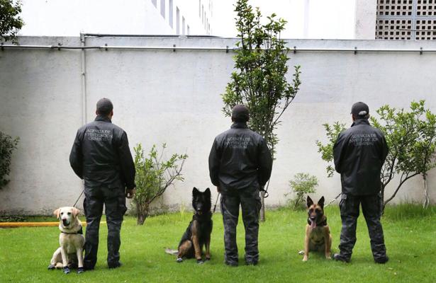 Duplica PGR estado de fuerza canina en búsqueda de explosivos