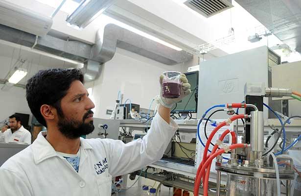 Producen biocombustibles gaseosos a partir de residuos de la industria vitivinícola