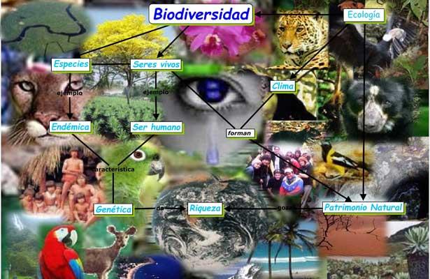 """Pérdida de biodiversidad es """"más importante que el cambio climático"""""""