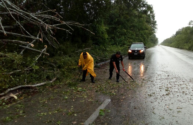 Ejército y Secretaría de Seguridad Pública de Yucatán liberan carreteras de árboles caídos