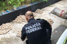 Impiden comercialización de más de 2 mil huevos de Tortuga Marina