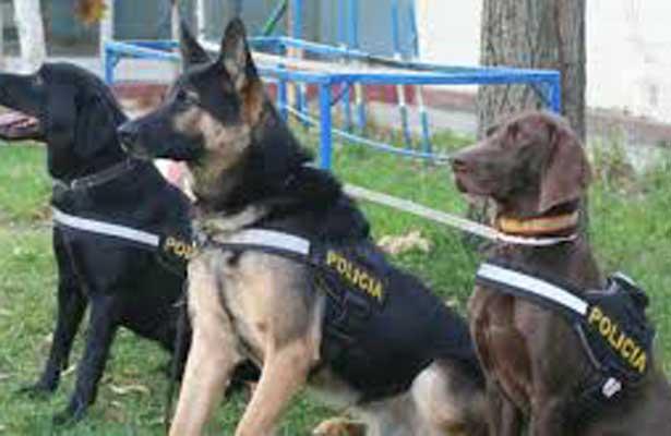 Binomios caninos detectan aparente droga