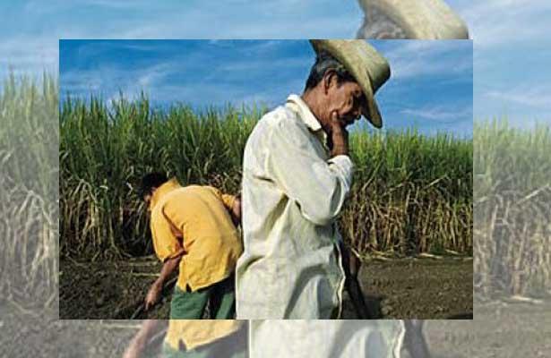 Campesinos mexicanos, en pie de guerra contra el TLCAN