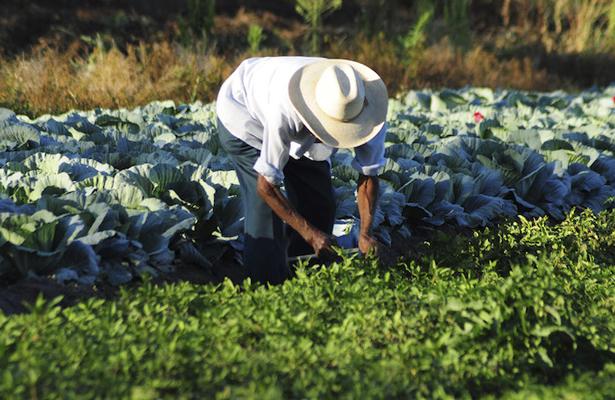 TLCAN discrimina a pequeños agricultores