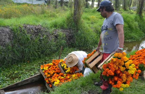 Inicia la siembra de cempasúchil en la CDMX