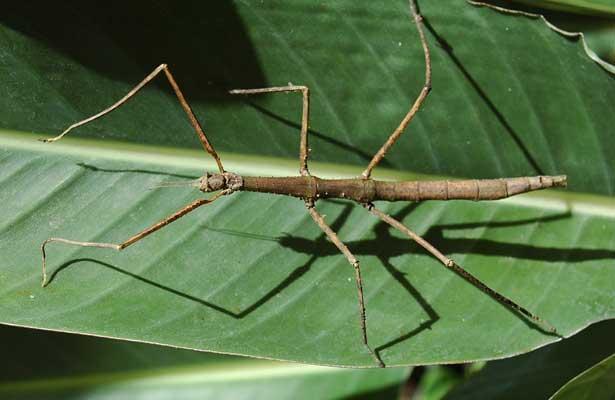 Insecto más grande del mundo es criado en China