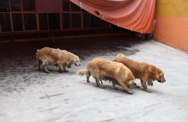Rescatan a 38 perros de condiciones infrahumanas en Iztapalapa
