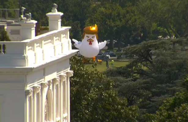 Pollo gigante idéntico a Trump, aparece en Casa Blanca
