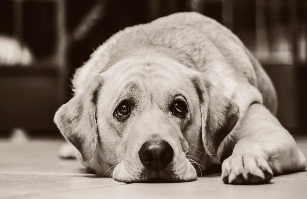 Buscan concientizar a niños sobre el abandono animal