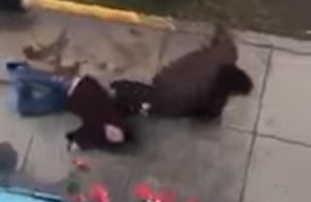 VIDEO Mujer tremendamente golpeada, ¡por su novio!