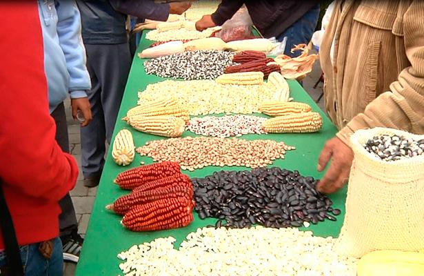 Chapingo convoca a movimiento nacionalista en defensa del maíz