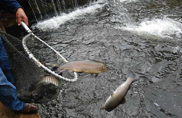 Refuerza la CONAPESCA impulso a la acuacultura ante estabilización de la producción pesquera