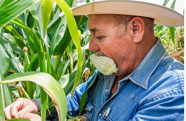 Incrementará México 27.8 por ciento producción agrícola gracias a planeación estratégica de SAGARPA