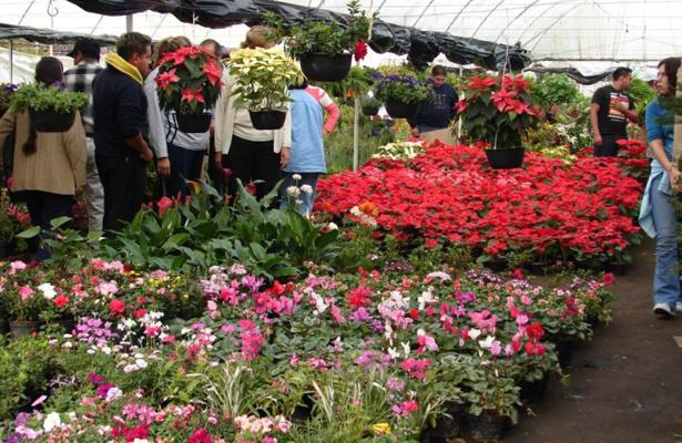 Demandarán floricultores de Xochimilco apoyos de ALDF